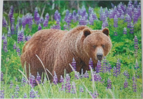 Bear on the Meadow.jpg