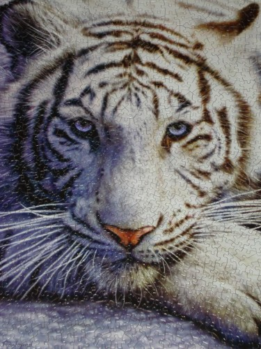 White Tiger Face.jpg
